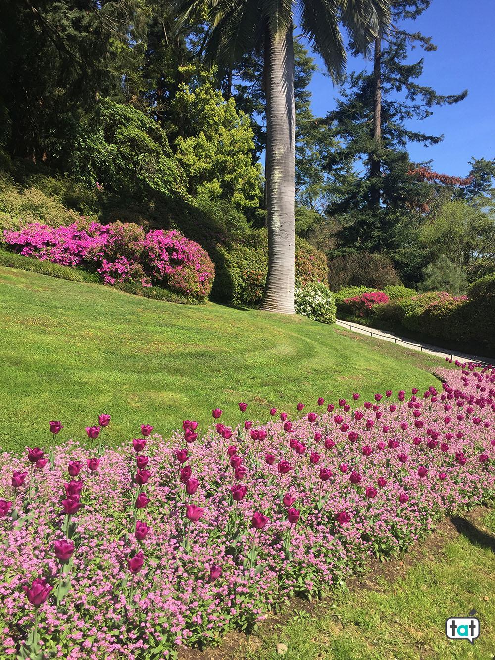 villa carlotta giardini botanici fiori