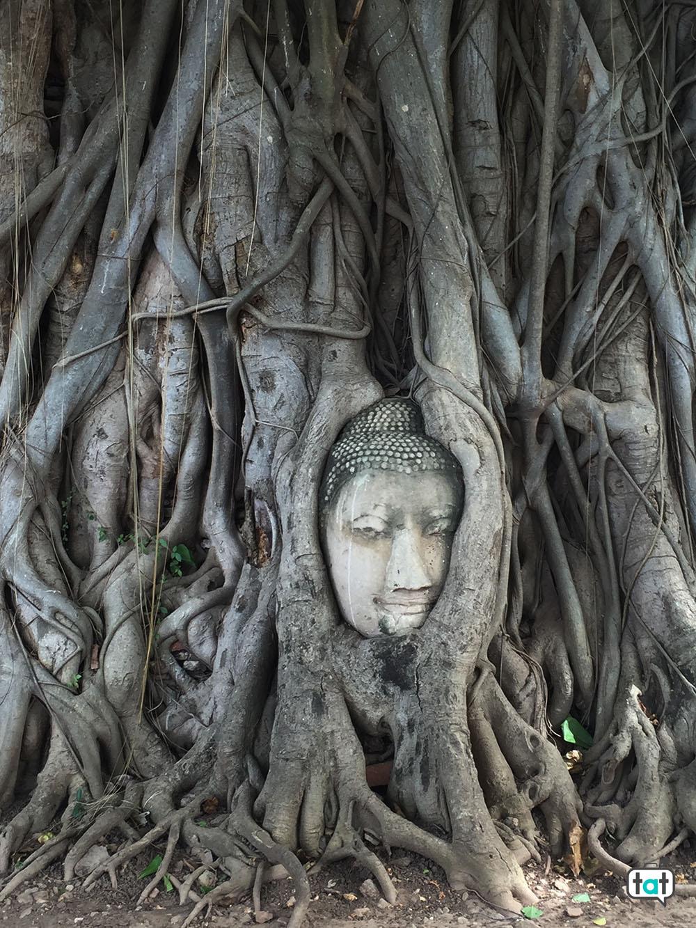 thailandia ayutthaia testa buddha
