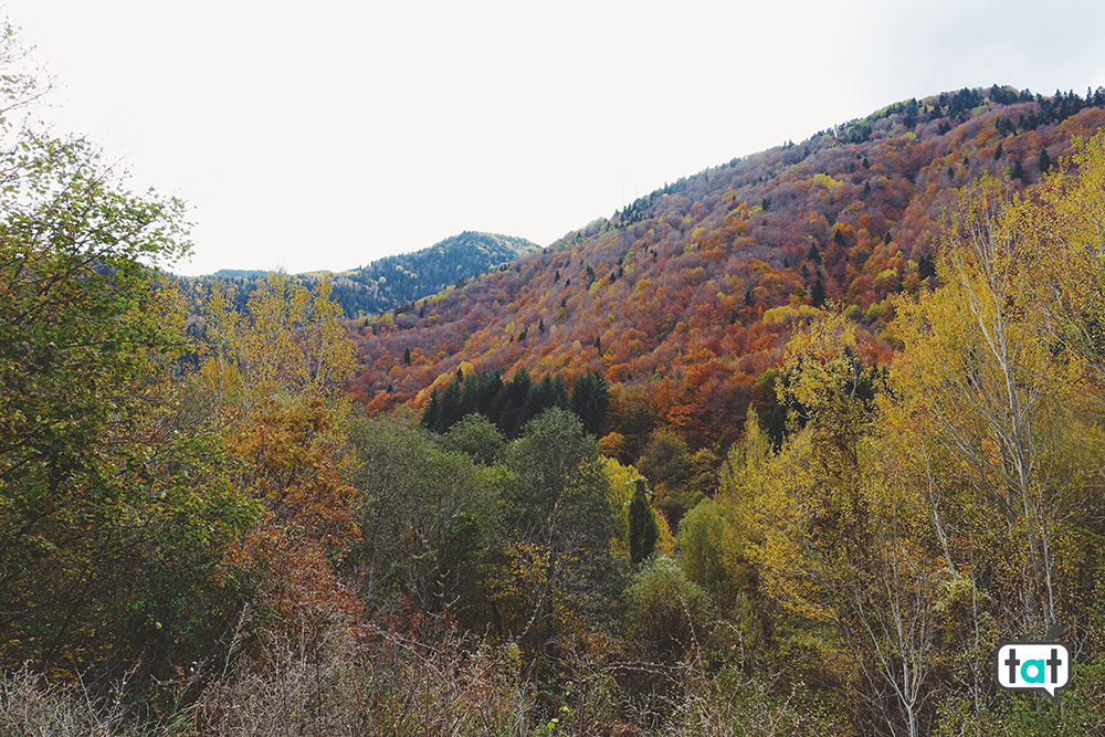 Foliage Bulgaria