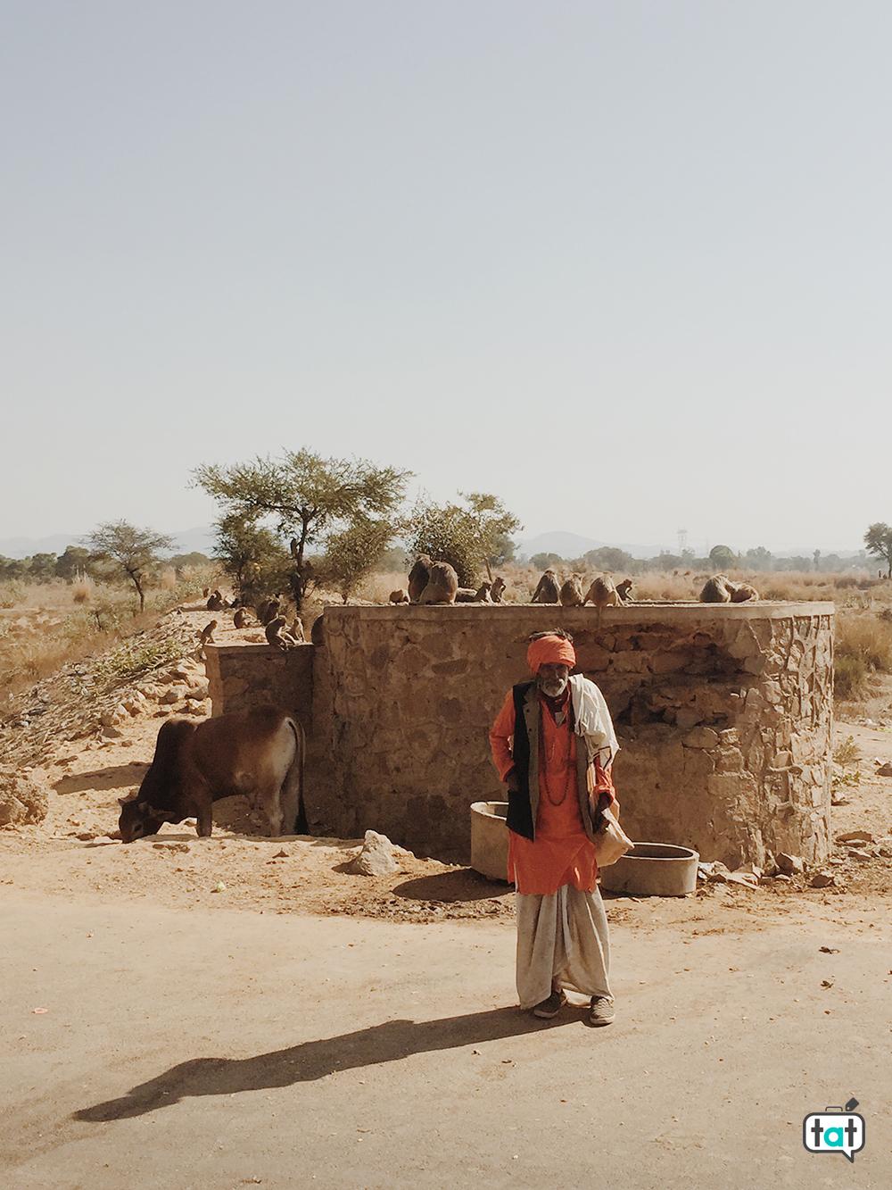 Scimmie sulla strada per Jaipur