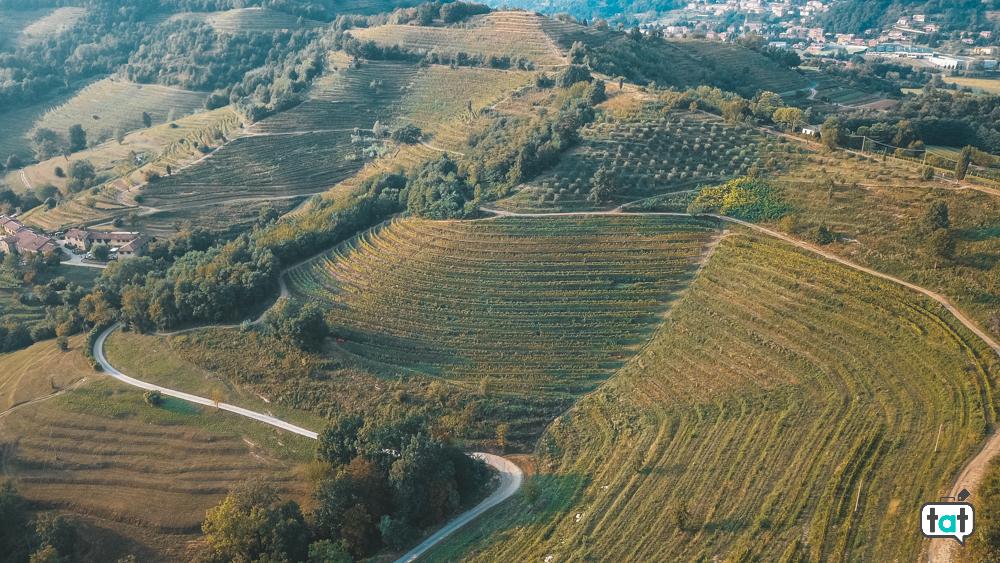 vigne oasi galbusera bianca