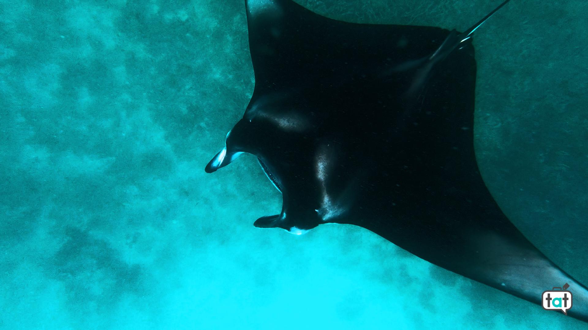 nuotare mante maldive