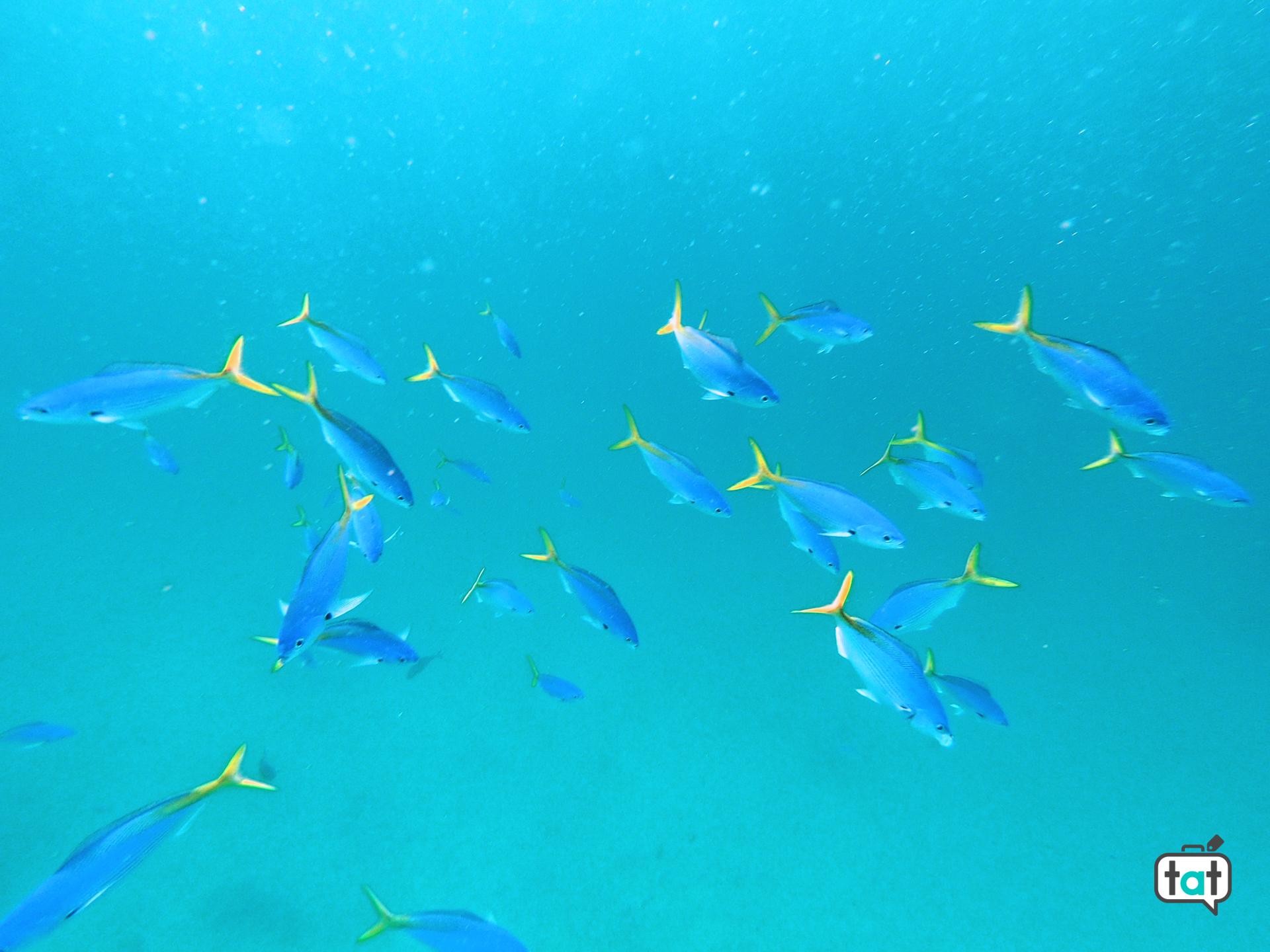 pesci maldive